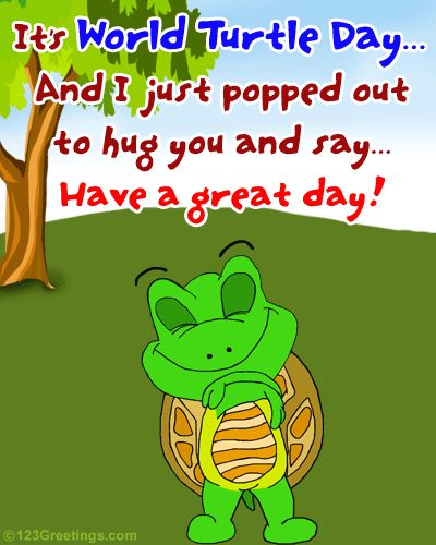 turtle day | Cute Wish On World Turtle Day. Free World Turtle Day eCards, Greetings ...