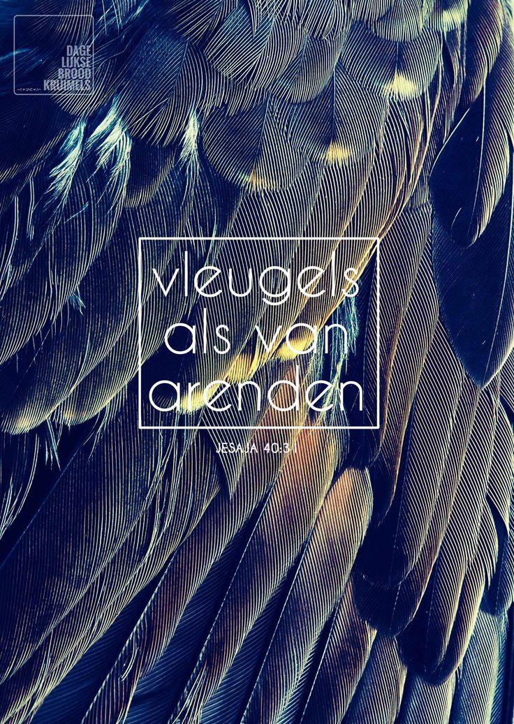 Vleugels als van arenden. Jesaja 40:31  #Arend, #Vleugels  http://www.dagelijksebroodkruimels.nl/quotes-bijbel/jesaja-40-31/