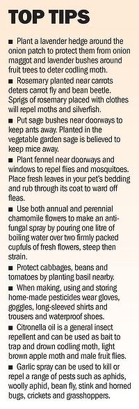 Tips on using herbs to attract/repel insects.