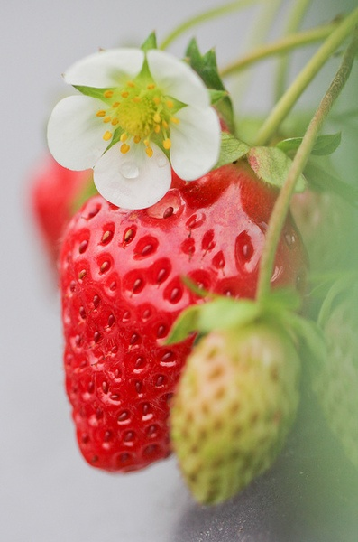 Strawberry pick by Bibi Paradise on Flickr.