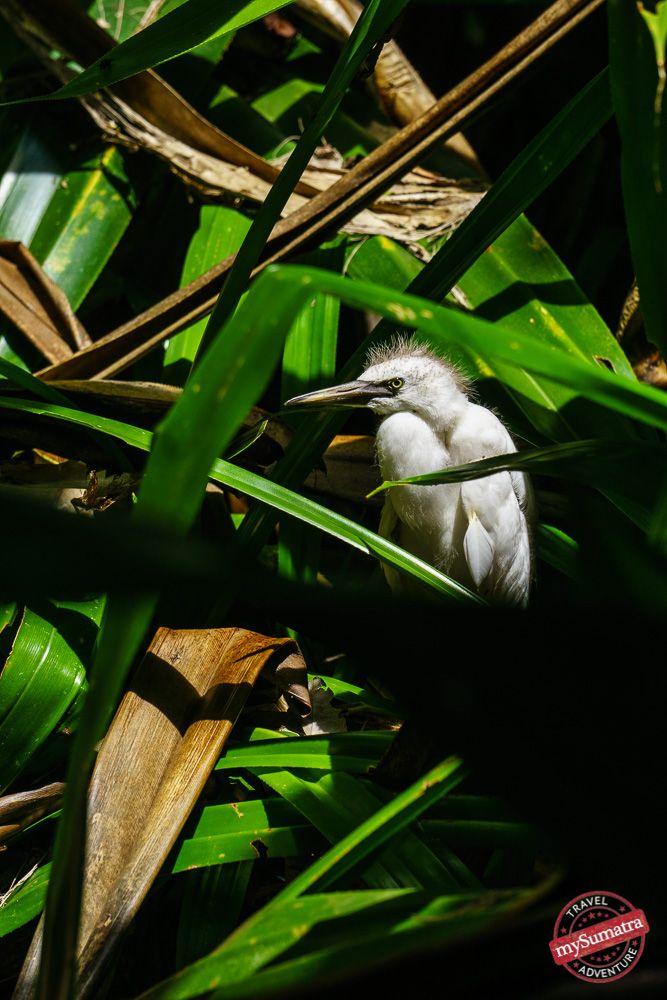 Experience the amazing bird life on Enggano Island.