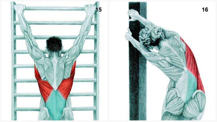 Растяжка мышц. Упражнения для растяжки мышц в картинках