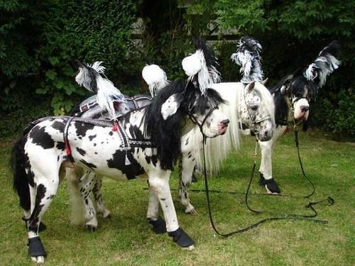 Great danes deserve great costumes, and there's nothing greater than this horse getup. It's time us humans take advantage of their superior size and and ride them around! Ok, not really, but at least they'll look cool in the process. Maybe you can string a pack together and form a Dane-Horse carriage?