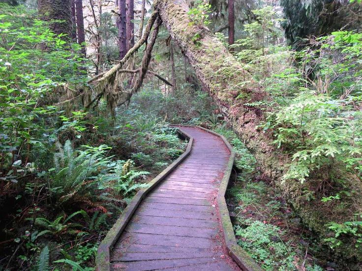 The San Josef Bay Trail in Cape Scott Provincial Park at the northwest end of Vancouver Island, British Columbia, Canada, is wheelchair accessible.