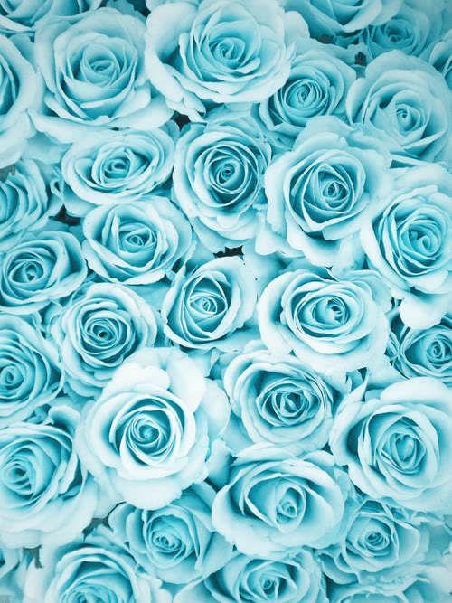 Imagem de rose, flowers, and blue