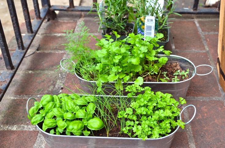 tiny herb garden apartment ideas pinterest