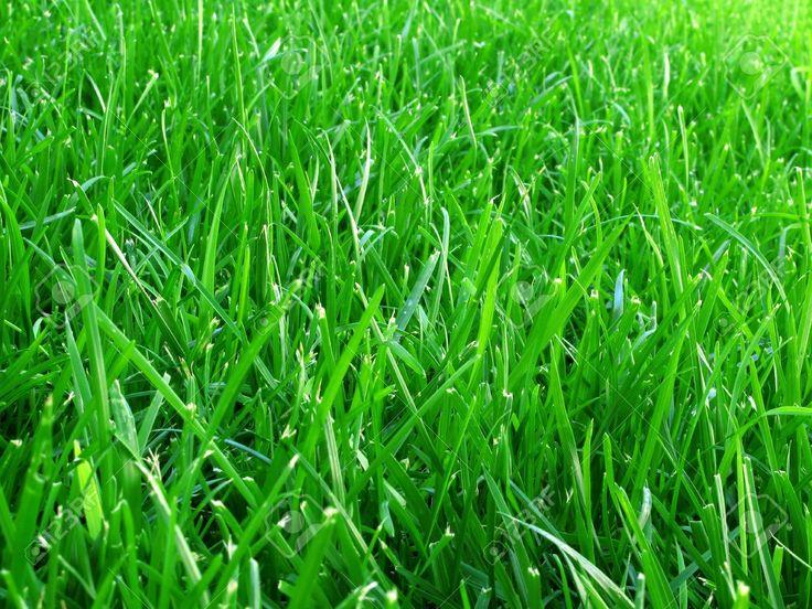 Green grass closeup HD wallpaper Best grass seed