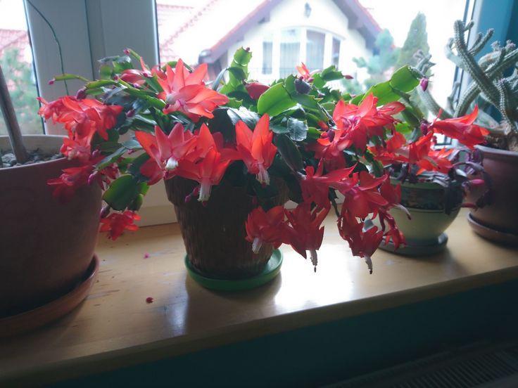 Grudnik obsypany kwiatami