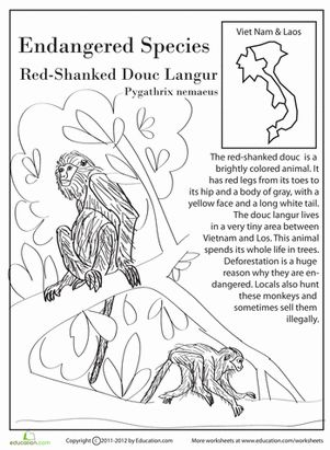 best 20 endangered animals lessons ideas on pinterest facts about endangered animals extinct. Black Bedroom Furniture Sets. Home Design Ideas