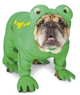 Unique Dog Halloween Costumes