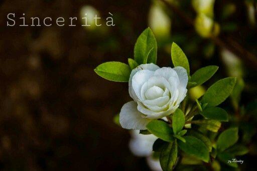 Sincerità...il significato della candida gardenia ❤