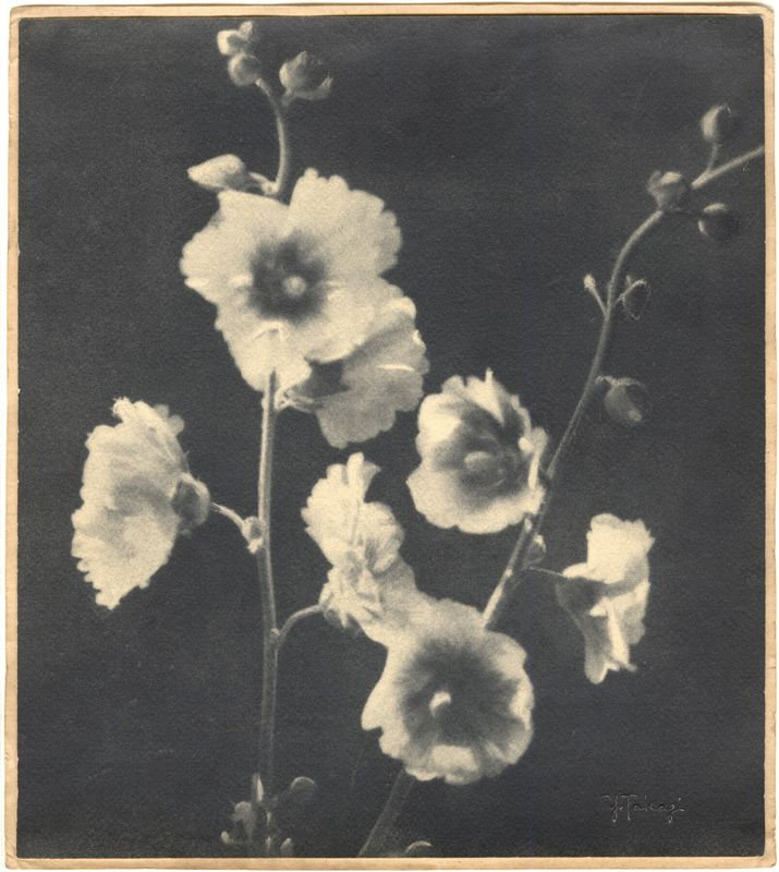 Yukio Takagi Photography FlowersVintage PhotographyContemporary PhotographyVintage PrintsWhite