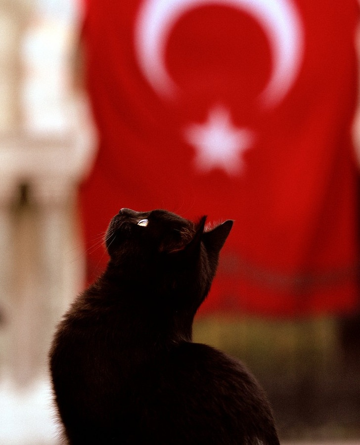 Black cat in Istanbul, Turkey with Turkish flag in background. Image by Shaun Higson: