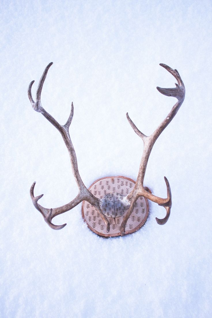 Wall mounted antler rack from real reindeer antler from Arctic Lapland.    This extraordinary piece is made from real reindeer antlers and a part of skull. (Unfortunately a reindeer has died in this process, but local people harvest all parts from reindeer and use accordingly and the reindeer husbandry helps local sami people to survive. Animal has been treated with respect)    I have used pyrography pen to draw patterns into wood and skull.    Antler rack is attached to a piece of birch…