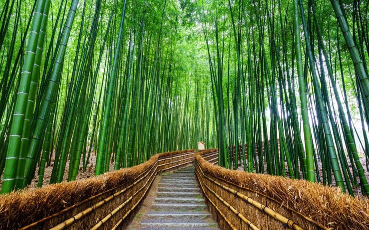 Julian Ryall steps into a world of forest inns and remote shrines as he hikes the Nakasendo Way, the centuries-old highway at the heart of feudal Japan