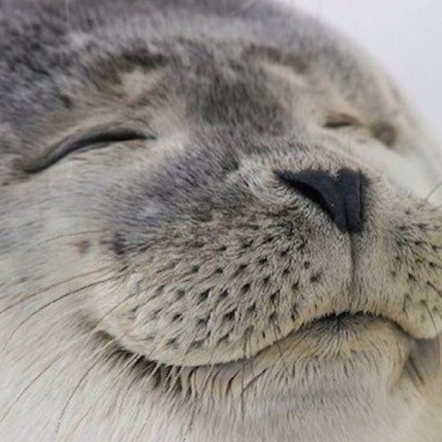 .: Happy Faces, Animal Baby, Sweet, Real Life, Happy Seals, Creatures, Baby Animal, Smile, Baby Seals