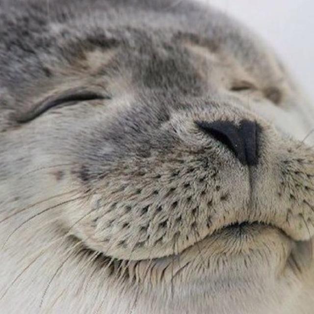 .Real Life, Animal Baby, Happy Face, Happy Seals, Creatures, Baby Animal, Adorable, Smile, Baby Seals