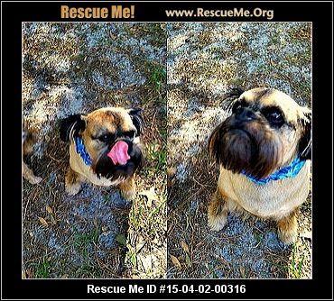 Griffon Dog Rescue