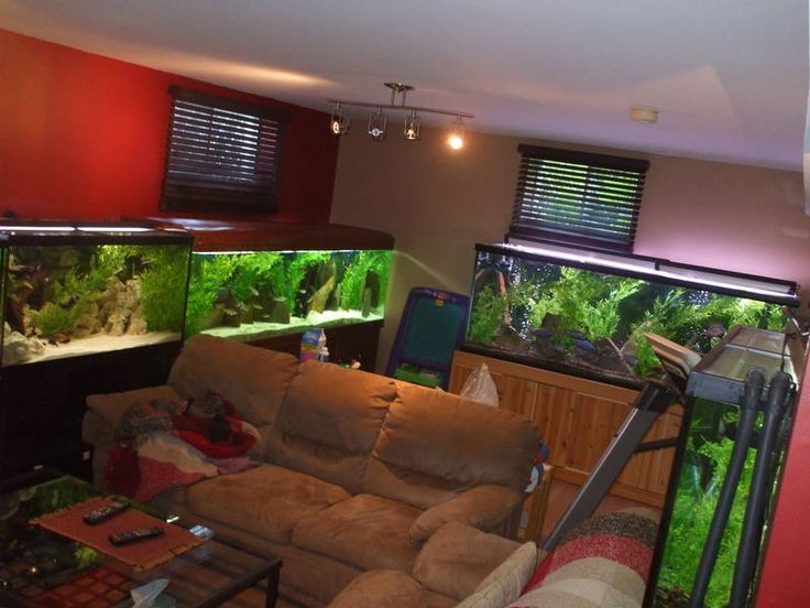 Man Cave With Tank : 67 best man cave ideas images on pinterest aquariums fish