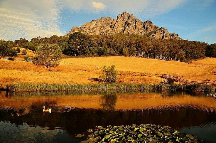 Credit to Tasmanian photos.  MT. Roland