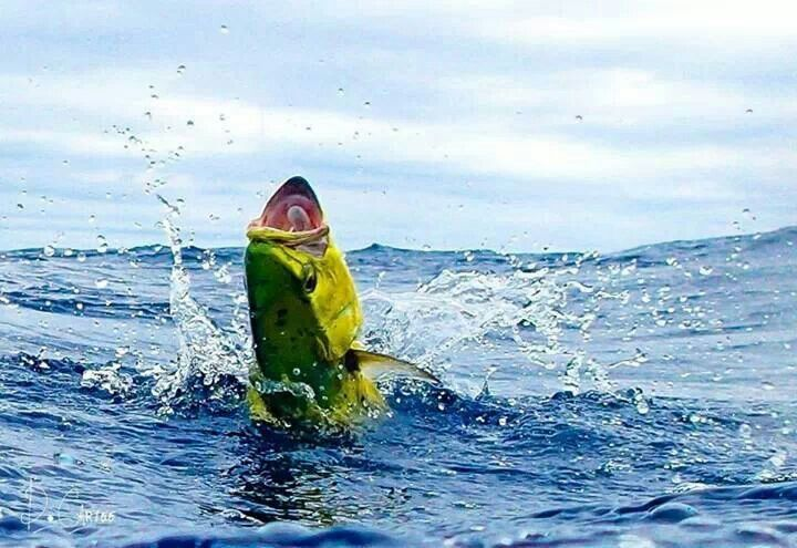 11 best the fa la me fishing images on pinterest for Saltwater fishing kayak