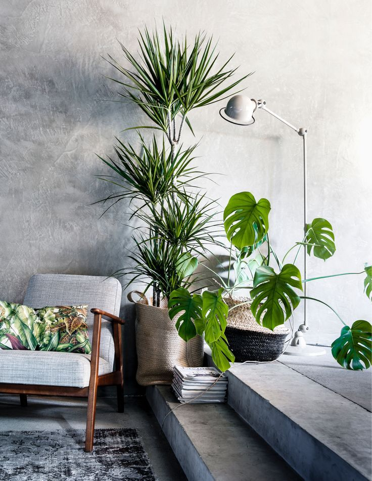 Plants and concrete, love this look for an urban botanical feel