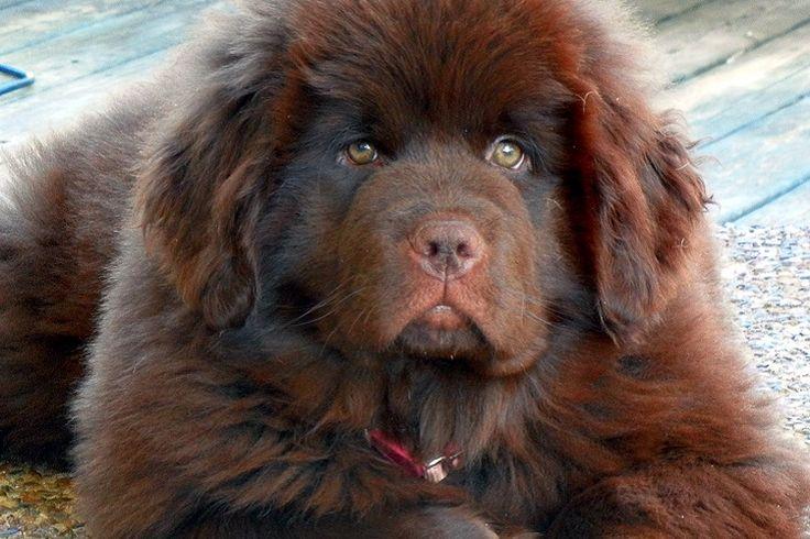 Αυτές είναι ίσως οι 10 πιο τεμπέλικες ράτσες σκύλων