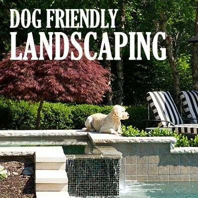 537 best images about pets paradise on pinterest for Dog friendly landscape design