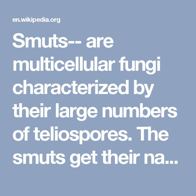 Smuts-- are multicellular fungi characterized by their large numbers of teliospores. The smuts get their name from a Germanic word for dirt because of their dark, thick-walled, and dust-like teliospores. They are mostly Ustilaginomycetes (of the class Teliomycetae, subphylum Basidiomycota) and can cause plant disease. The smuts are grouped with the other basidiomycetes because of their commonalities concerning sexual reproduction.