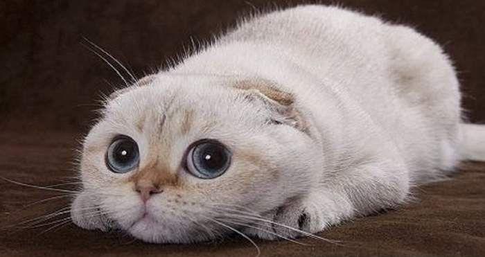 Sagitario: El gato Estable El gato Sagitario será un gato de largos viajes, sueños y visiones, que poseen la velocidad y la potencia de un caballo junto con el limitado cerebro y la sabiduría de un gato. Una especie de doble personalidad, este felino es impulsado por dos fuerzas que …