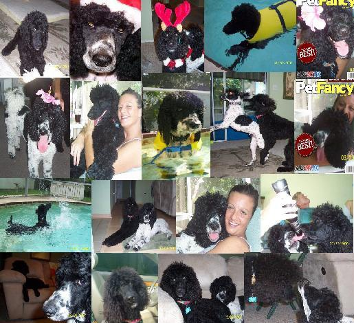 collage from the first year Buffett and Marley were together