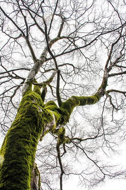 Green by Gigin, via Flickr: Photo
