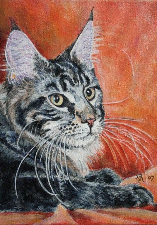 MCO kitten....
