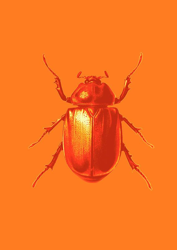 Beetle Print  Orange on Orange by Finandivy on Etsy