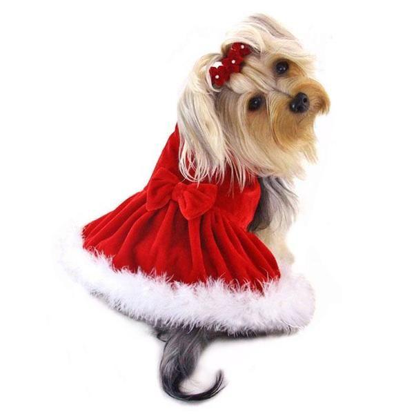 14++ Dog christmas dress info