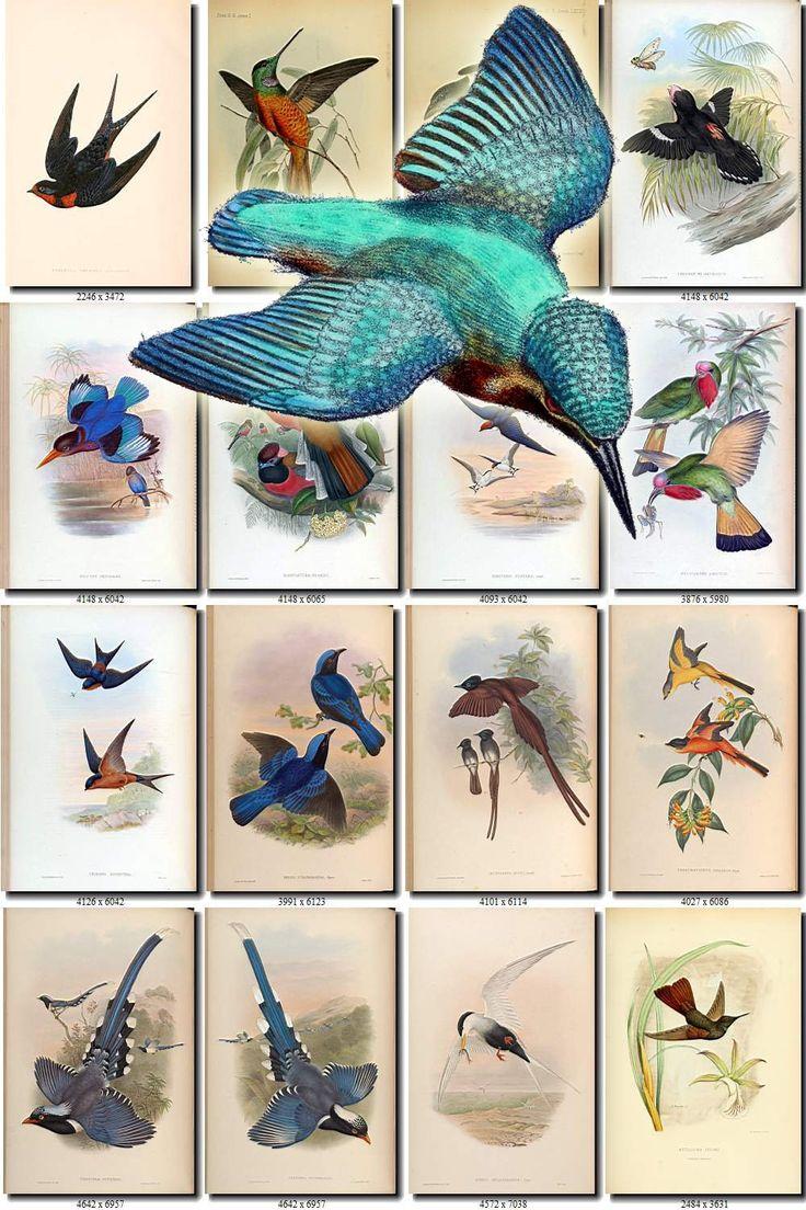 FLYING BIRD-2 Sammlung von 185 Bildern Vintage Bilder Vögel im Flug öffnen Flügel Hochauflösende digitale Download druckbare Illustration – Vintage graphics for design