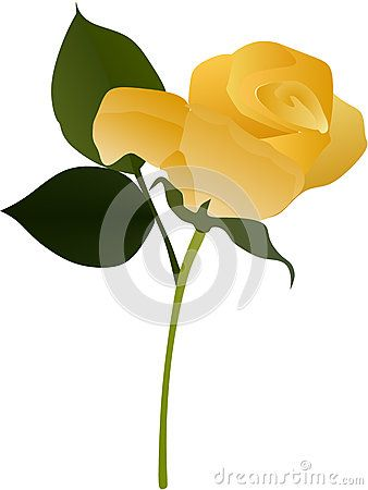 Vector illustration of a yellow rose.