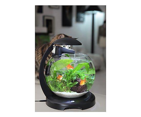 Boccia per pesci in vetro Cascade Globe- 31x35x27 cm