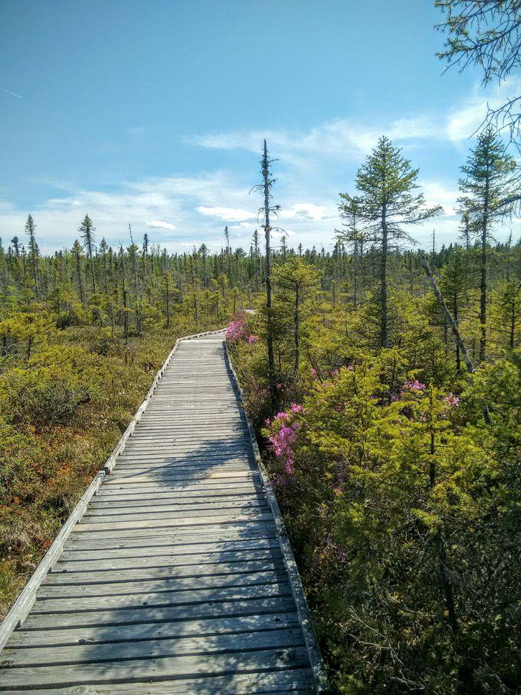 Bangor Bog Boardwalk, Bangor, Maine