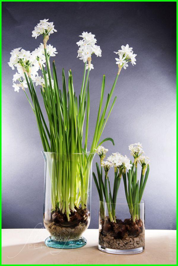 Tanaman Hias Yang Bisa Tumbuh Di Media Air Tanaman Dalam Ruangan Tanaman Hiasan