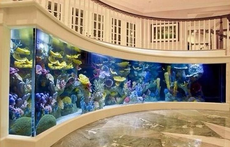 65 Amazing Aquarium Design Ideas for Indoor Decorations https://decomg.com/65-amazing-aquarium-design-ideas-indoor-decorations/