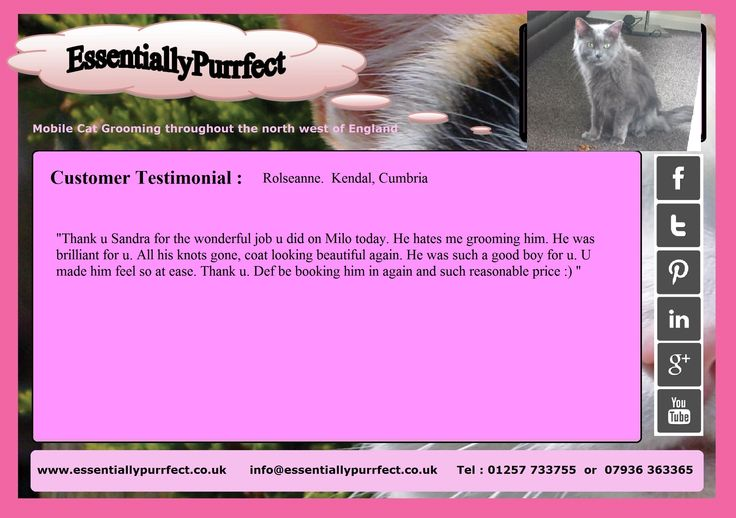 Customer Testimonial of EssentiallyPurrfect #mobile #MaineCoon #cat #catgrooming #LionClip service.  Roseanne #Kendal #Cumbria