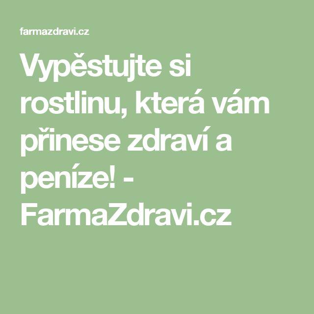 Vypěstujte si rostlinu, která vám přinese zdraví a peníze! - FarmaZdravi.cz
