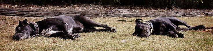 Swell Sculpture Festival   Two Black Dogs www.swellsculpture.com.au