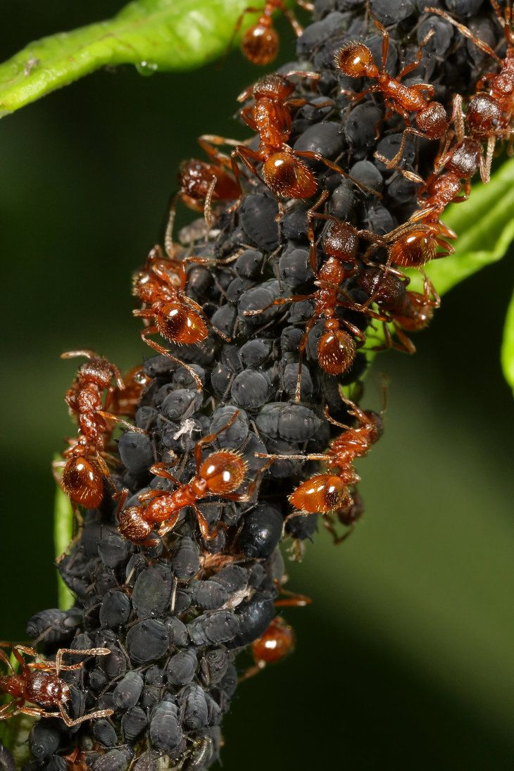 153 best ant a images on pinterest ants insect art