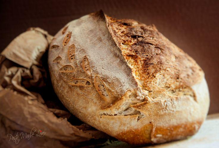 Pane di grano duro Saragolla