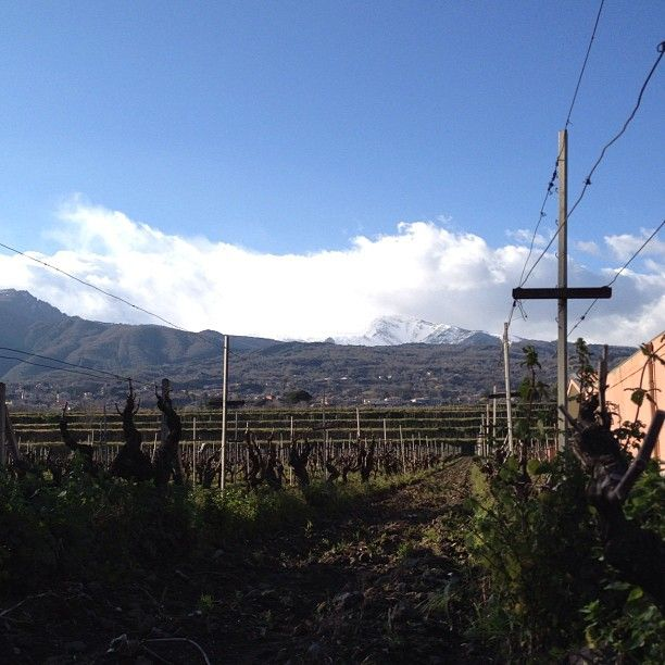 Mt. Etna in Sicily. One of my favorite wine regions.