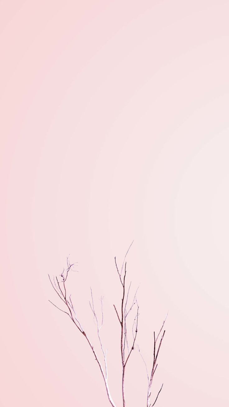Pinterest Minimalist Wallpaper