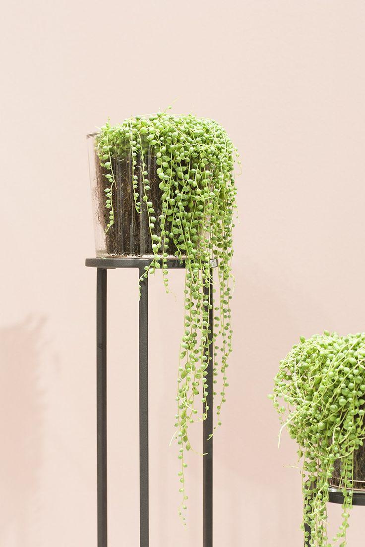 Meine Highlights auf der TENDENCE 2017 - hier: Styling von blomus