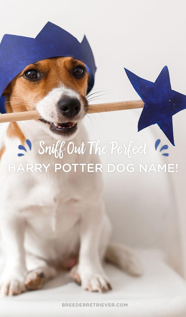 26 best Dog Names images on Pinterest